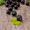 Ulei din coacăze negre Naturale