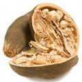 Semințe de baobab