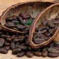 Coajă de cacao Bio