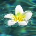 Floare de Bali