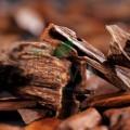 Extract din lemn de santal Bio