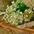 Extract din flori de soc