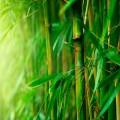 Perie pentru barbă din lemn de bambus