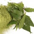 Extract de neem
