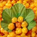Extract din semințe de cătină