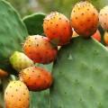 Ulei prețios bio din semințe de cactus