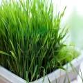 Lapte de corp revigorant cu lemongrass