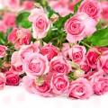 Trandafir de Grasse