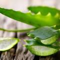 Aloe vera naturală